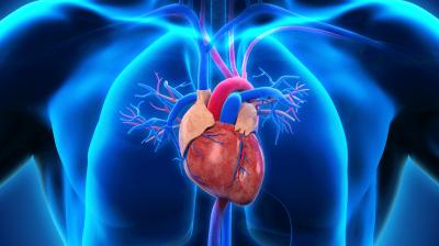 O chá na prevenção das doenças cardiovasculares