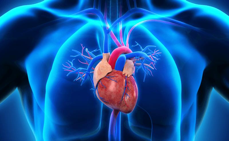 beneficios do cha nas doencas cardiovasculares