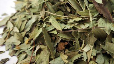 Chá de Sene: um aliado contra a prisão de ventre