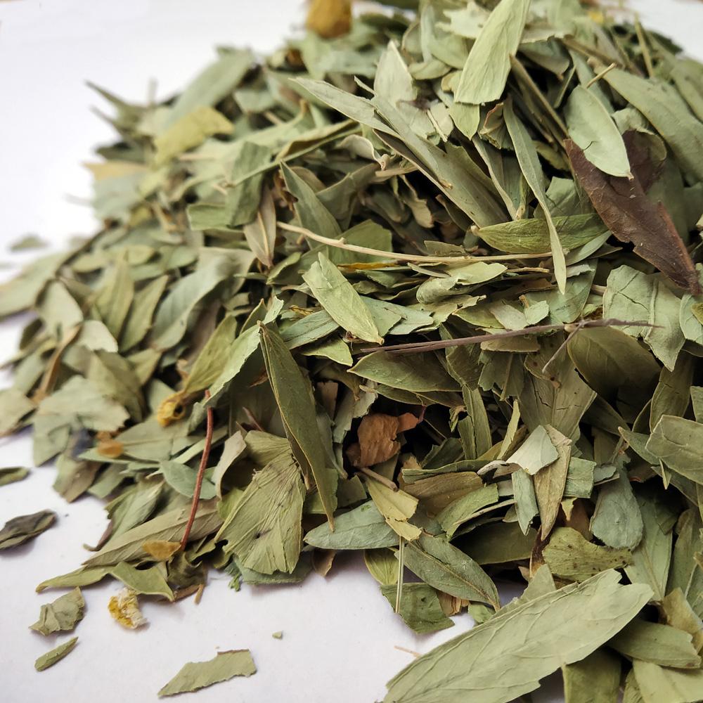 Folhas de senna angustifolia